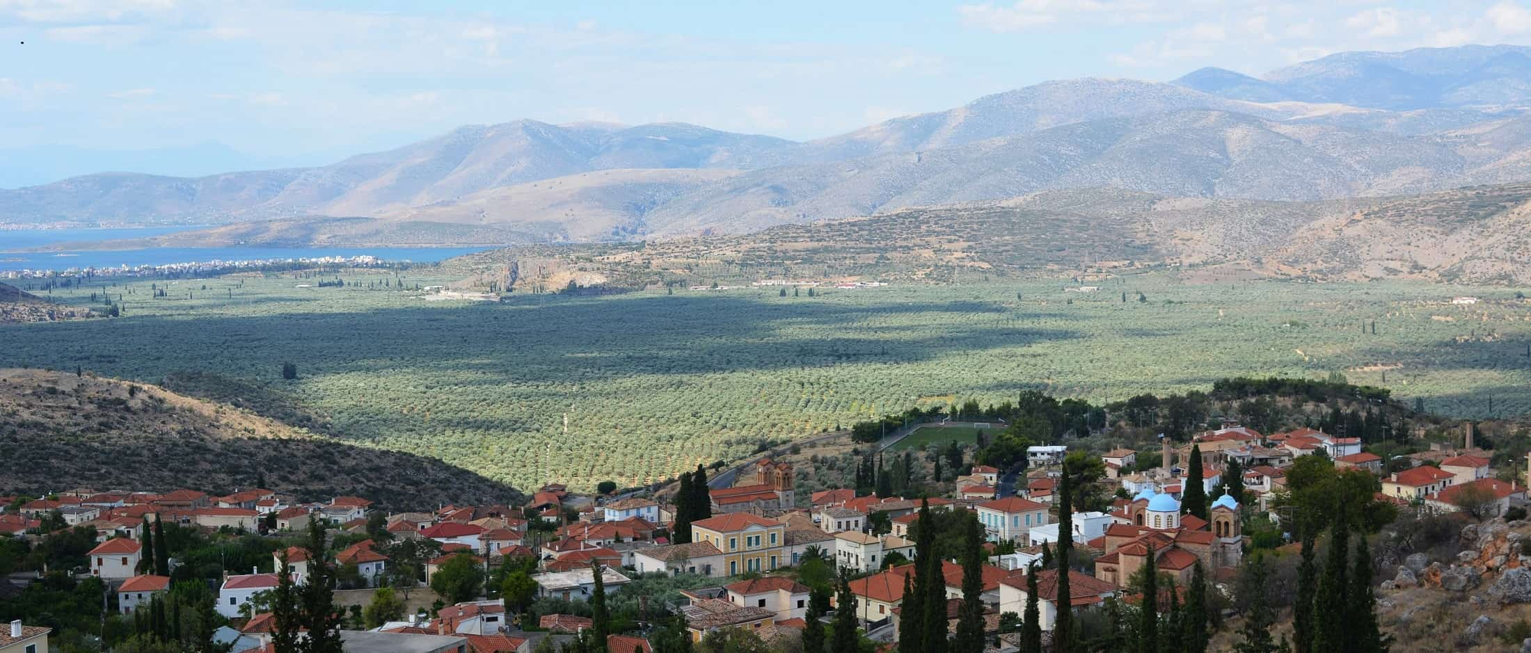 view of olive trees from central greece - our story Definitely Greece