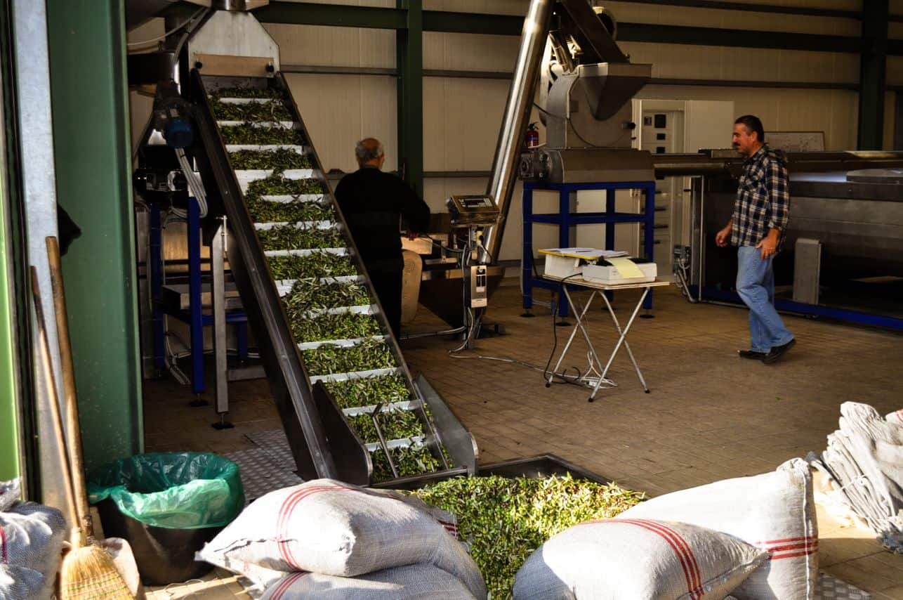 olive oil factory and production in Crete Island Greece
