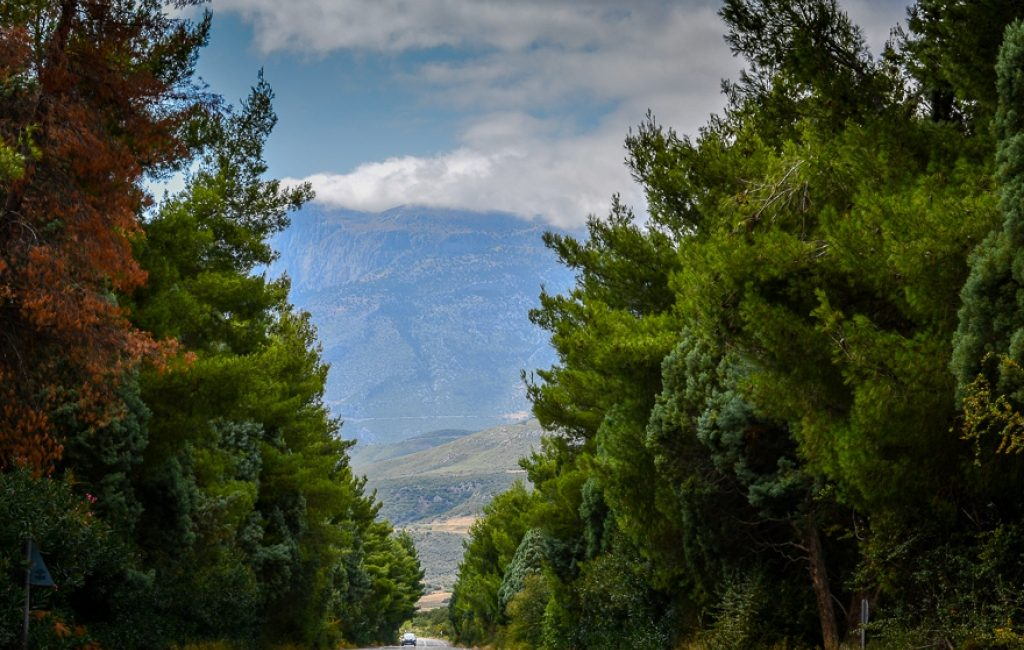 central Greece - road nature trees