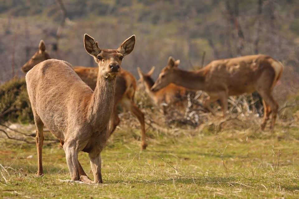 deer parnitha Athens lesser known sights PLatsoudis