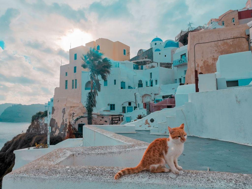 Cat Santorini Winter